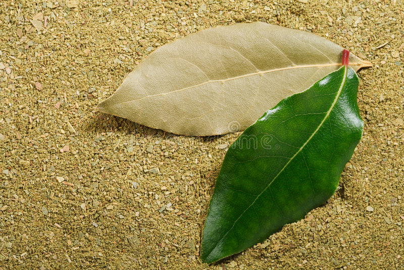 torkat nytt leavespulver för bakgrund fjärd arkivfoto