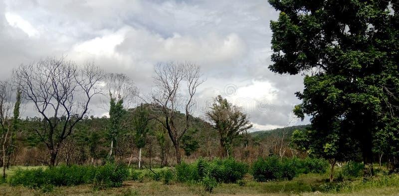 Torkat upp träd med en bergig sikt arkivbilder