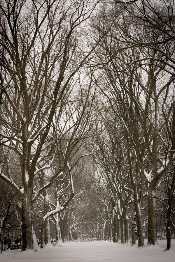 Tormenta de la nieve foto de archivo