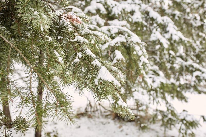 Tormenta de la nieve de la primavera en el parque de Chautauqua imagen de archivo