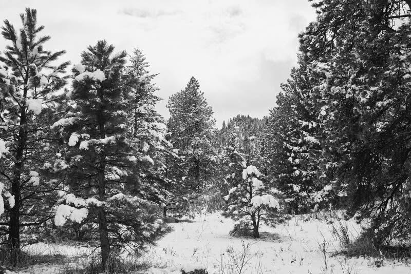 Tormenta de la nieve de la primavera en el parque de Chautauqua fotos de archivo libres de regalías