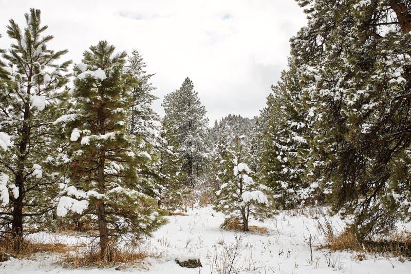 Tormenta de la nieve de la primavera en el parque de Chautauqua foto de archivo