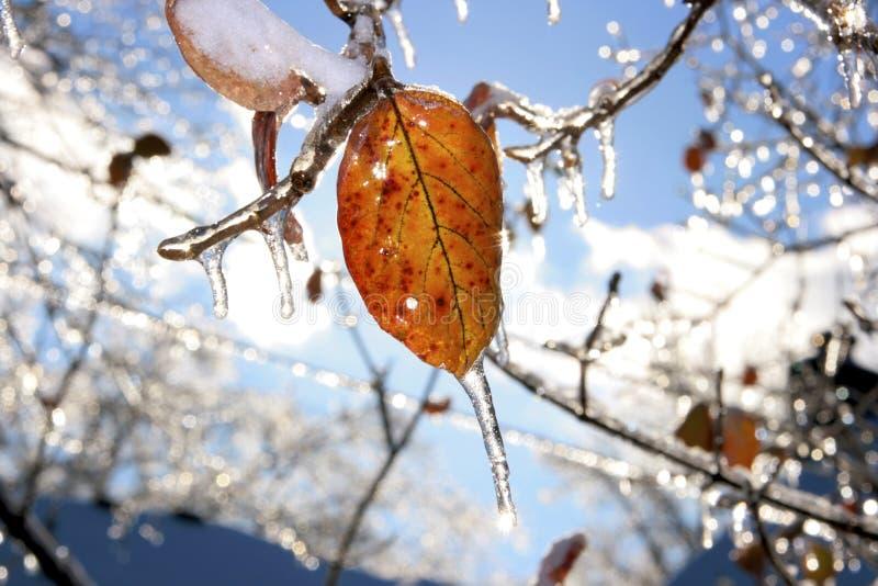 Tormenta de la nieve y de hielo fotografía de archivo libre de regalías