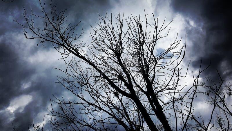 Tormenta del árbol imágenes de archivo libres de regalías