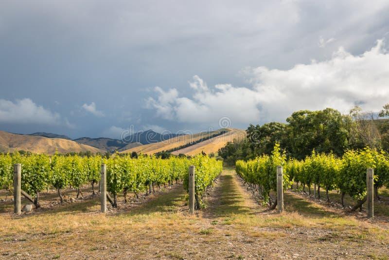 Tormenta sobre paisaje del viñedo en la región de Marlborough, Nueva Zelanda fotos de archivo