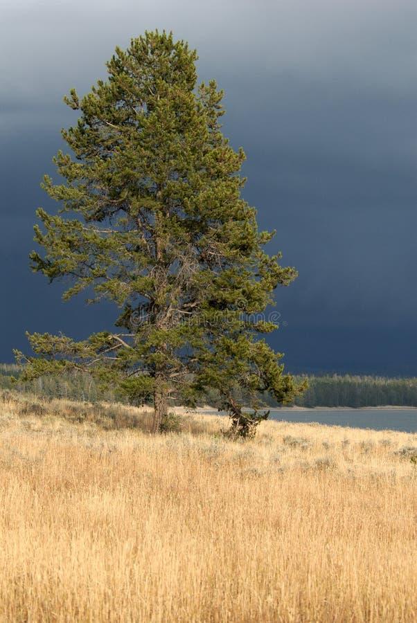 Tormenta solitaria del árbol y de la acopio foto de archivo libre de regalías
