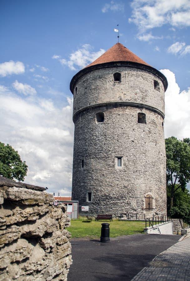 torn Kiek-i-de-kok i Tallin royaltyfria foton