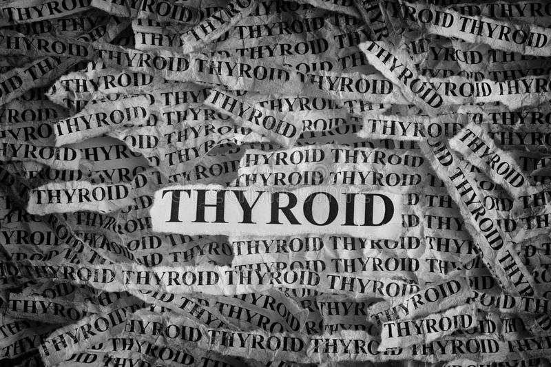 Torn pieces of paper with the words Thyroid royalty free stock images