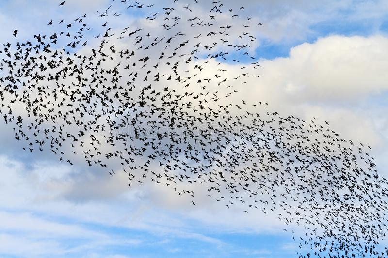 Tornado From Birds In The Sky With Clouds Stock Photo - Image of ...