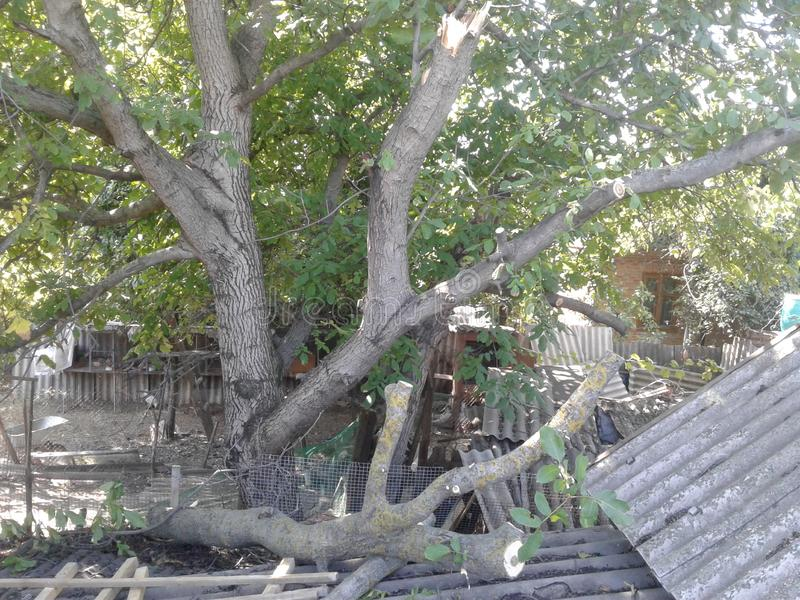 tornado broken tree stock image