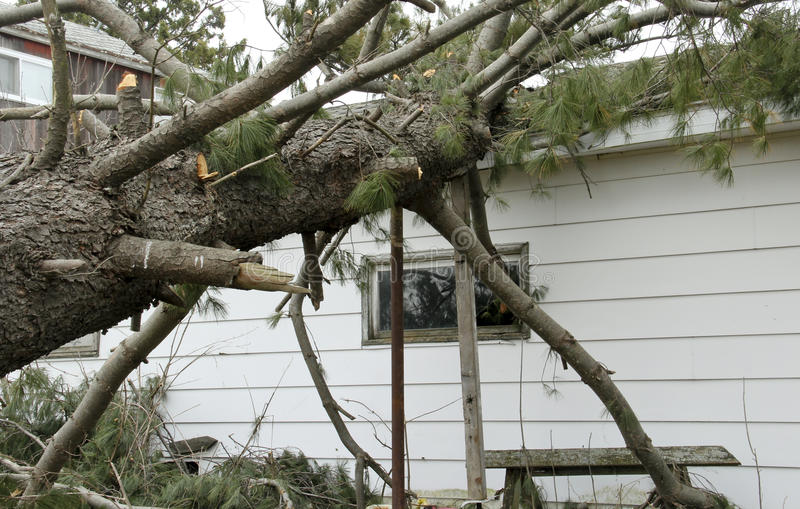 Tornado Damage with a pine tree on a house royalty free stock photo