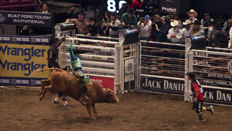 Torneo profesional del jinete de Bull en Madison Square Garden imágenes de archivo libres de regalías