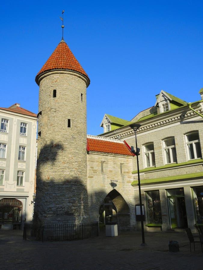 Tornet av den Viru porten i Tallinn royaltyfri fotografi