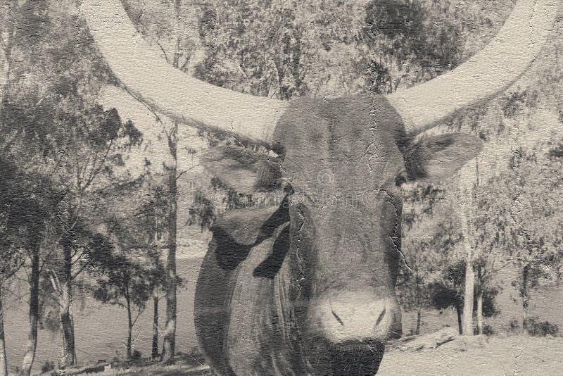 Toro de Tejas imágenes de archivo libres de regalías