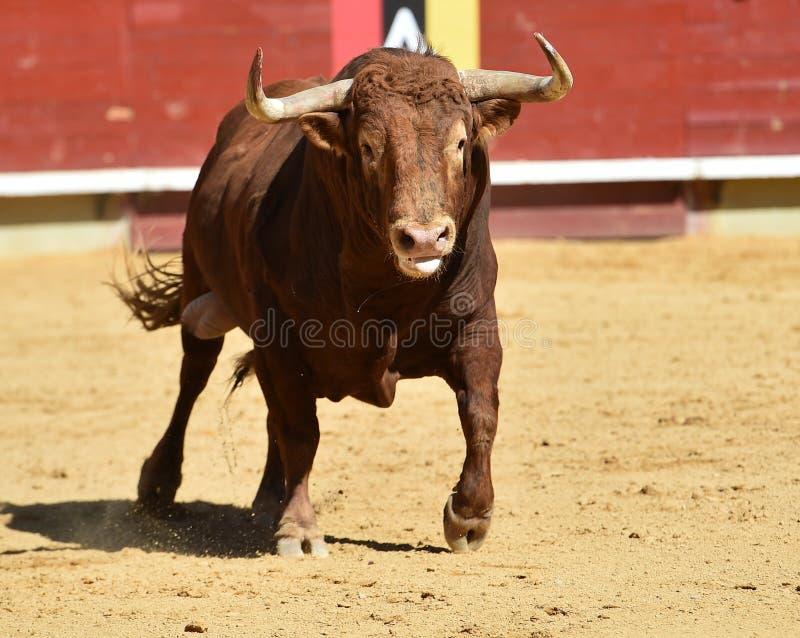 Toro español fotos de archivo