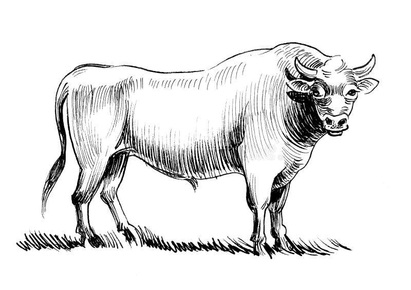 Toro fuerte libre illustration