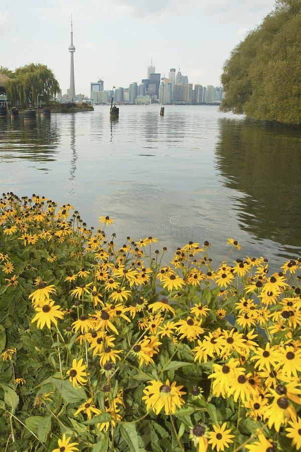 Toronto foto de stock
