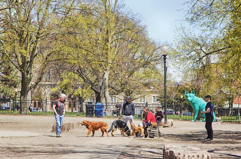 TORONTO, CANADÁ - 5 DE MAYO DE 2019: Gente con los perros en el parque del perro en Allan Gardens, Toronto, Canadá foto de archivo