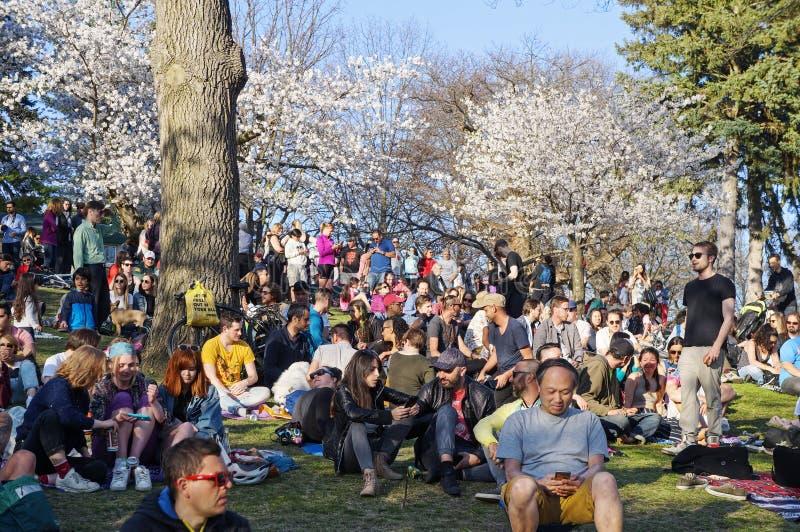 Toronto, Canadá - 05 09 2018: El alto parque Toronto atrae a muchos visitantes en primavera para admirar la cereza hermosa de Sak fotografía de archivo libre de regalías