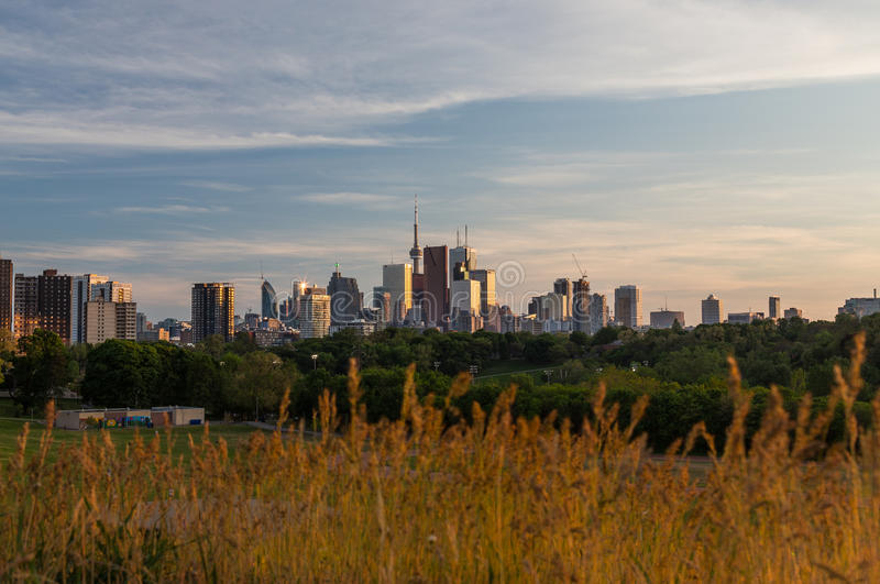Toronto Downtown Skyline and Plant Foilage. TORONTO, CANADA - 27TH MAY 2015: The Toronto Skyline towards sunset with plant foilage in the foreground. There is royalty free stock images