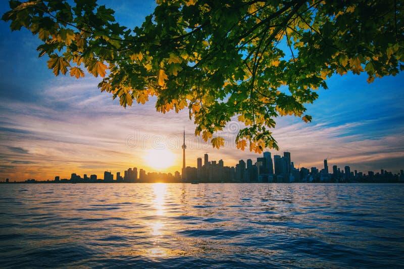 Toronto linia horyzontu z klonowymi gałąź zdjęcie stock