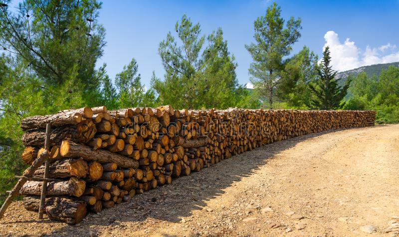 Toros de madeira naturais, cortados e empilhados Fundo da floresta fotos de stock royalty free