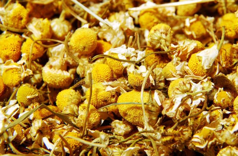 torr chamomile arkivfoton