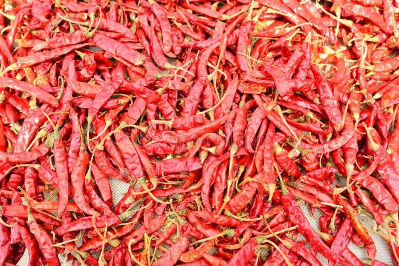 torr chili royaltyfria foton