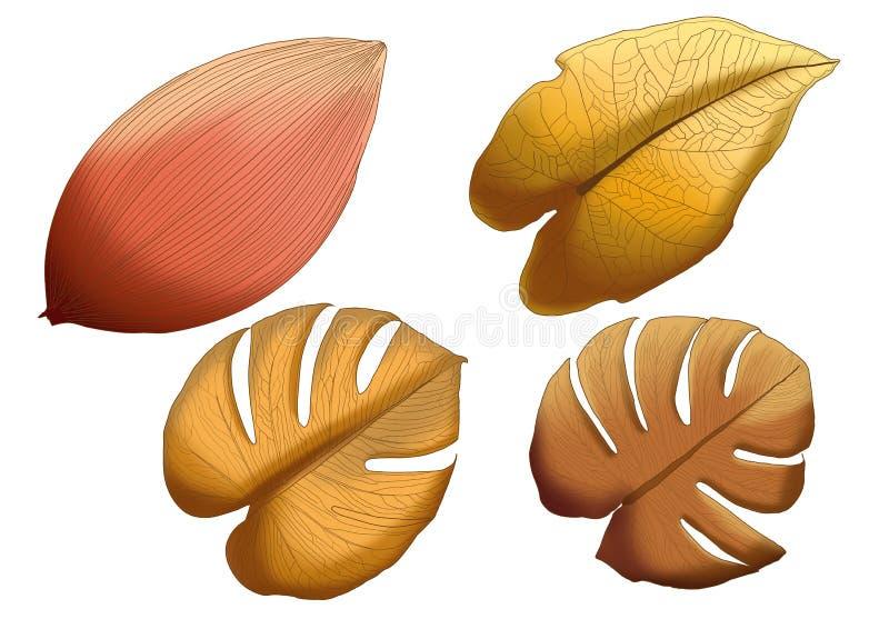 Torr f?rg f?r brunt f?r bladbruntm?larf?rg p? vit bakgrund vektor illustrationer