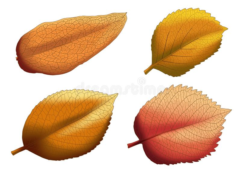 Torr f?rg f?r brunt f?r bladbruntm?larf?rg p? vit bakgrund royaltyfri illustrationer