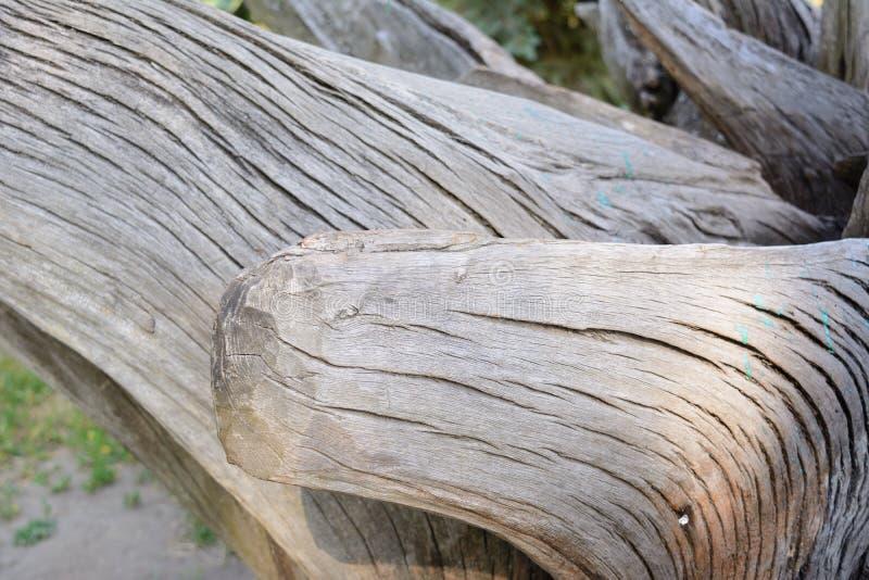 Torr filialtextur för makro på träbakgrund arkivfoto