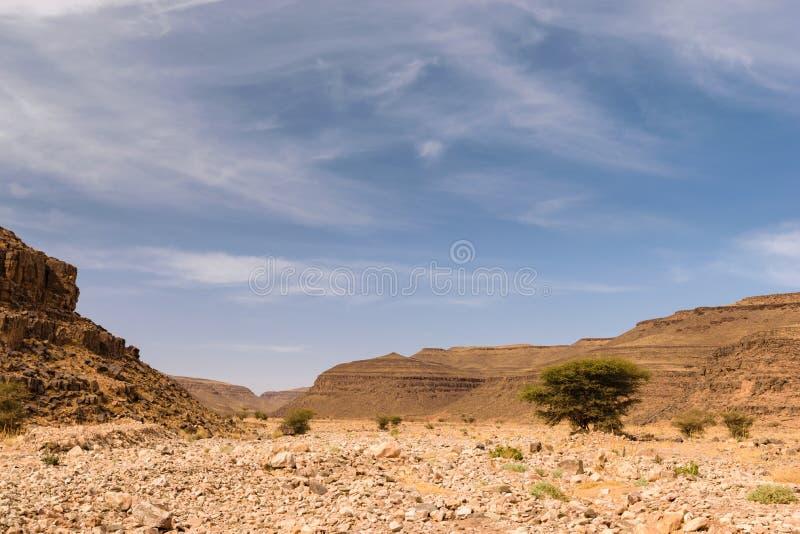 Torr flod Wadi Draa nära Zagora, Marocko fotografering för bildbyråer