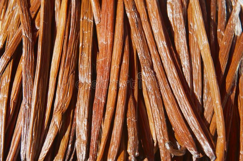 Torr frukt för vanilj i jäsningprocessen för att gradera vaniljanstrykning på La Reunion Island royaltyfri bild