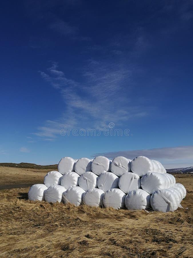 Torr höbal i den vita plastpåsen, åkerbrukt fält på solig himmel, land för Island lantligt naturlantgård, sugrör på ängen, gul gu royaltyfri bild