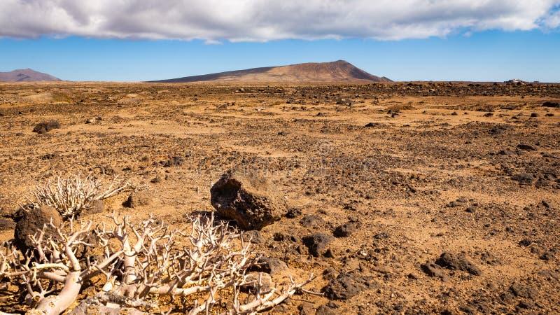 Torr karg slätt med berget i avståndet arkivfoto