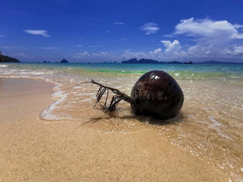 Torr kokosn?t p? vit sand och den bl?a stranden royaltyfri foto
