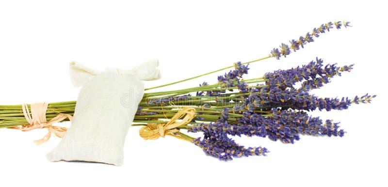 torr lavendel royaltyfri foto