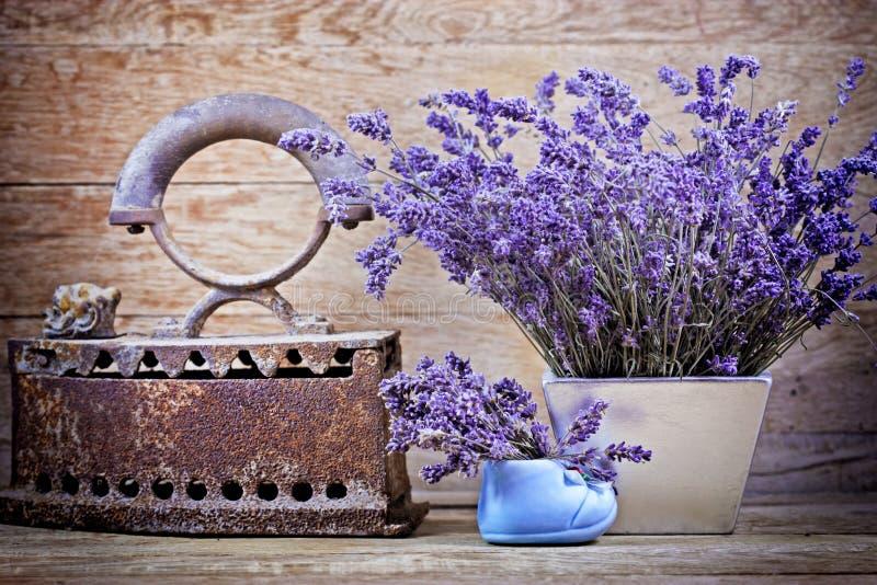 Torr lavendel- och tappningstil royaltyfri foto