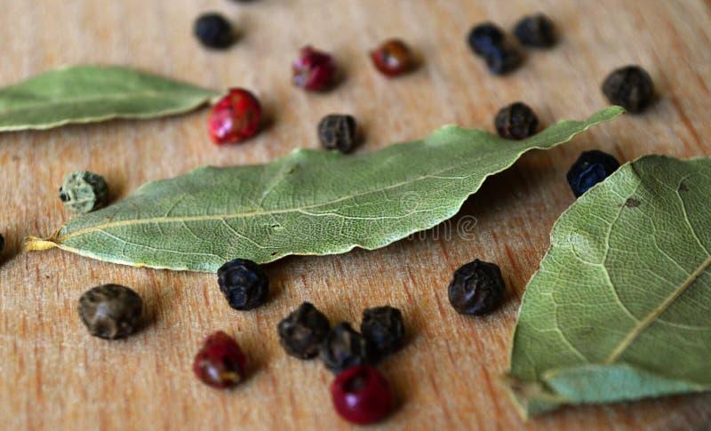 torr leaf för fjärd royaltyfria bilder