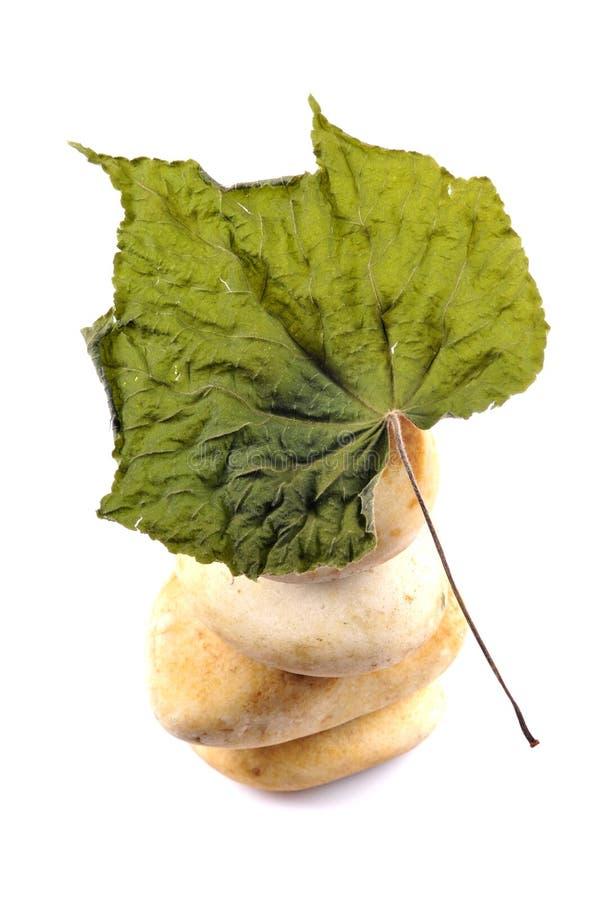 torr leaf för höst arkivfoto