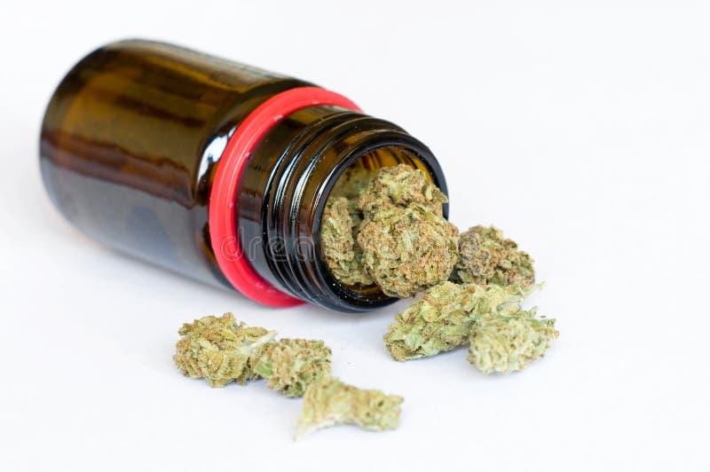 Torr medicinsk marijuana slår ut på vit bakgrund arkivfoton