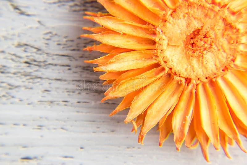 Torr orange blomma, detalj arkivfoto