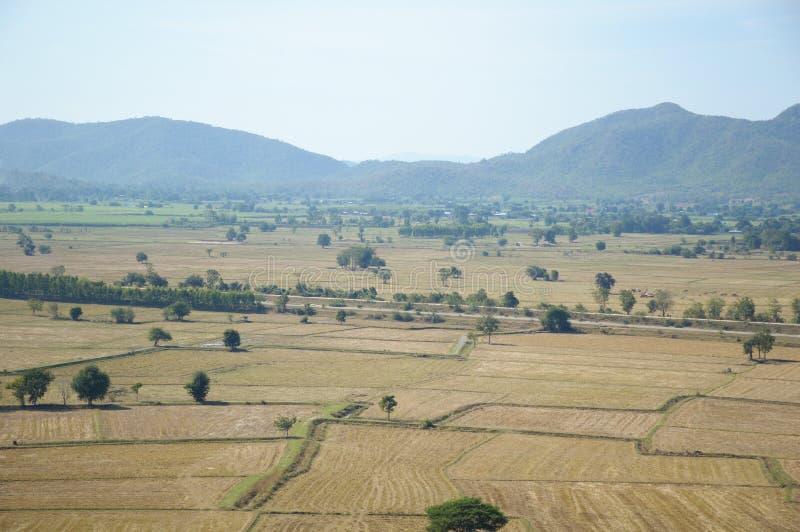 Torr risfält arkivfoto