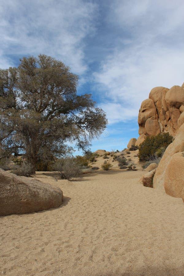 Torr strömsäng Joshua Tree National Park fotografering för bildbyråer