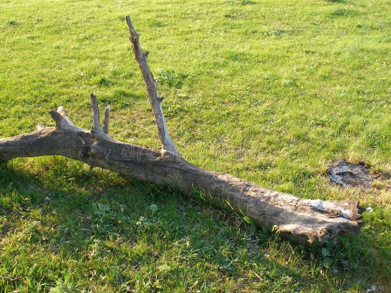 torr tree för filial arkivfoton