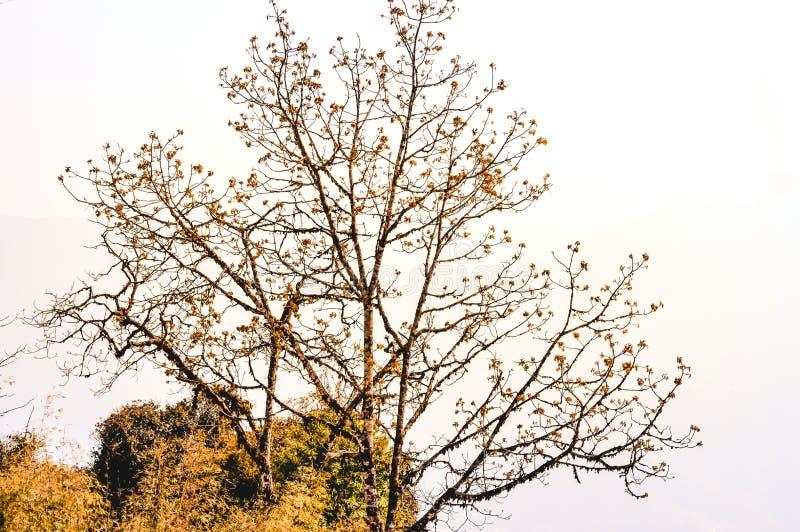 Torr tropisk trädfilial på vit bakgrund Bilden togs från naturlig miljö från naturen parkerar på ett ljust soligt arkivbilder