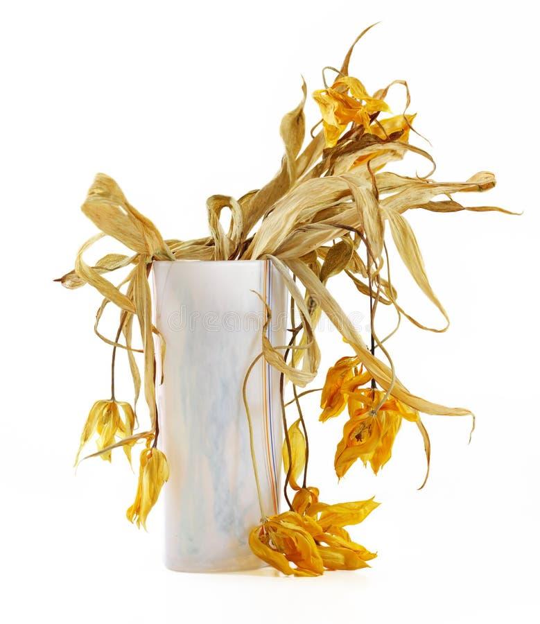 torra blommor royaltyfri foto