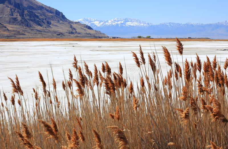 Torra gräs Great Salt Lake i Utah royaltyfria bilder
