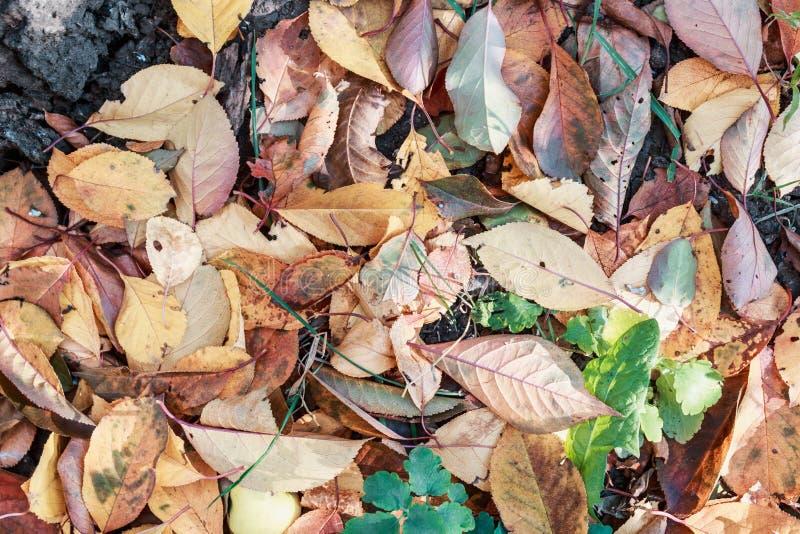 Torra höstsidor i bruna signaler Närbild Bakgrund royaltyfri foto
