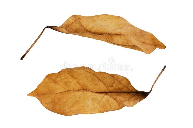 torra leaves för bakgrund royaltyfri foto